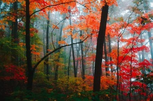Joshua S. Carlson Photography captures this fall shot in the Arkansas Ozarks.